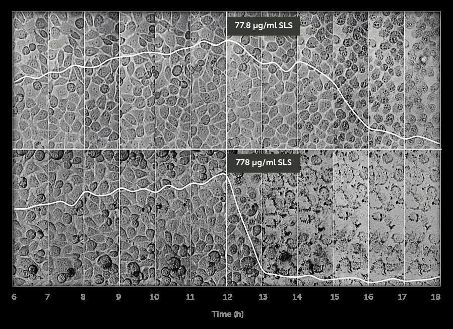 Incyton toxicology Cells Timelaps